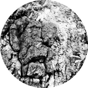 Mava Nebukat - Polymer - LIIT003 - LIITHELI