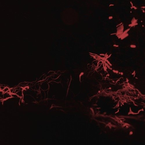 Svarte Greiner - Moss Garden - MIALP037 - MIASMAH