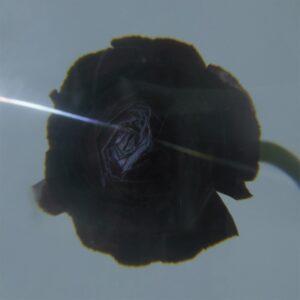 Pablo's Eye - Dark Matter - STRLP-022 - STROOM