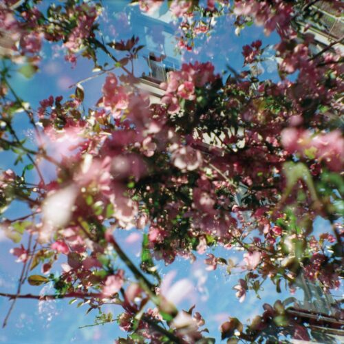 Nahash - Flowers of the Revolution - SBKT034 - SVBKVLT