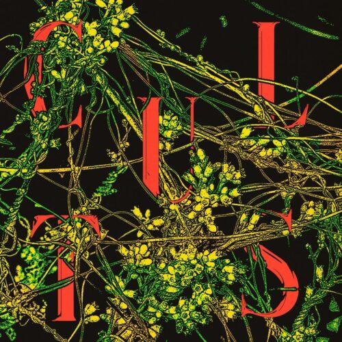 Cults - Host (Evergreen Vinyl) - LYN053LP-C1 - SINDERLYN